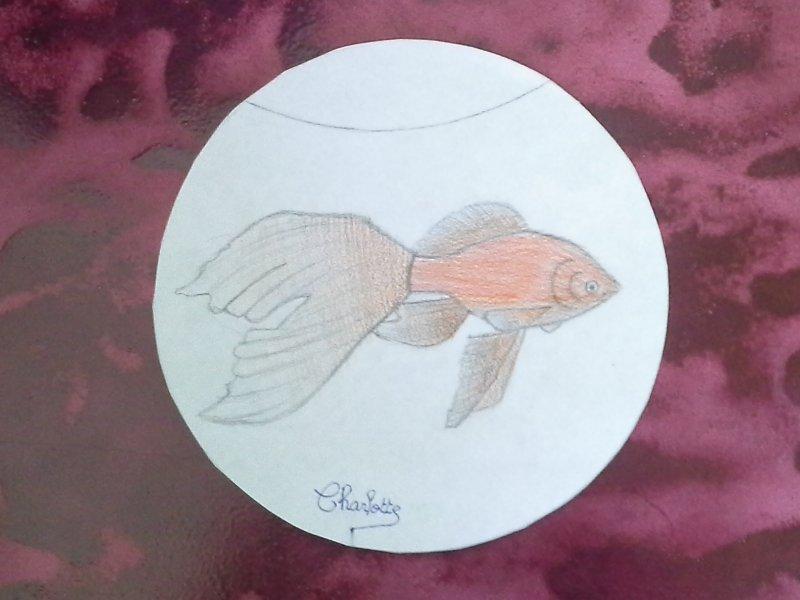poisson-davril-charlotte